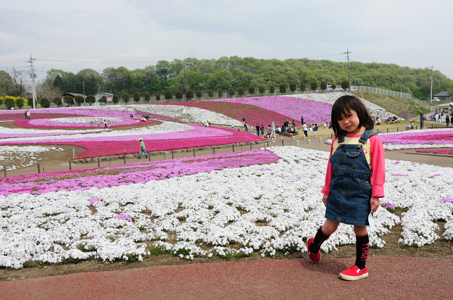 芝桜 062_01