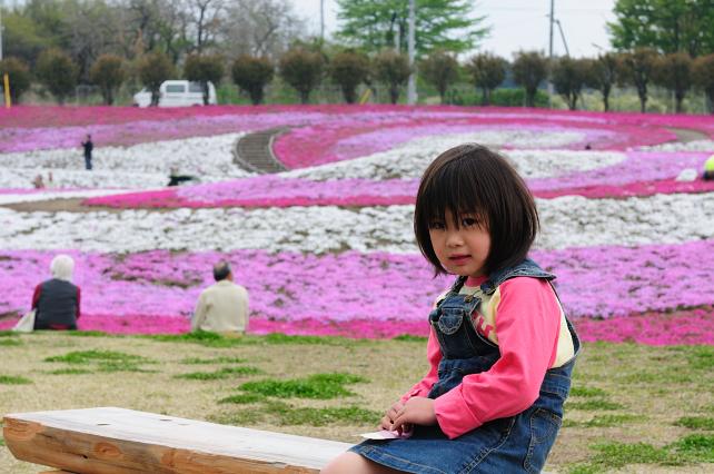 芝桜 082