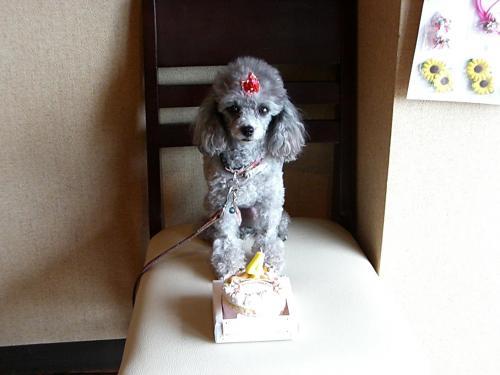 鑑賞用POP集 021