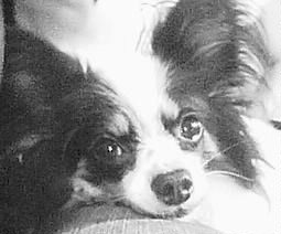 moss dog