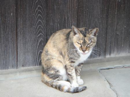 0019警戒する猫