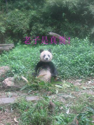 香江 041