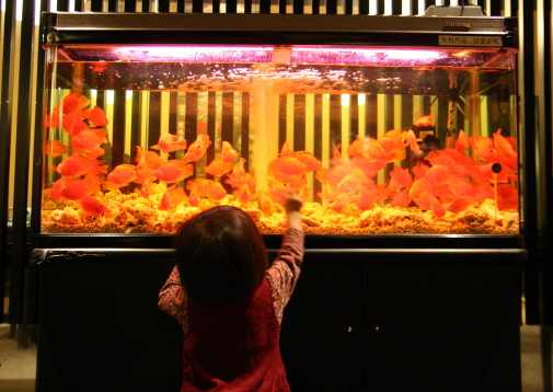 ぎゅうぎゅう金魚