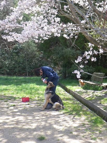 4/10桜の木の下で