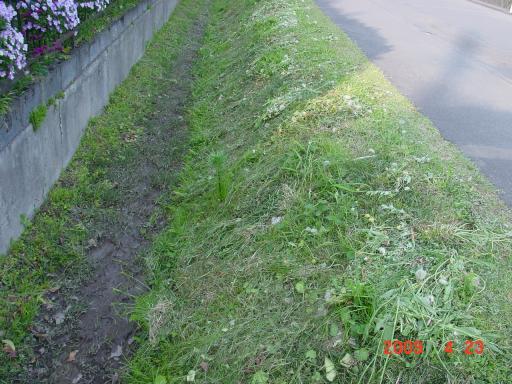 土手の草刈