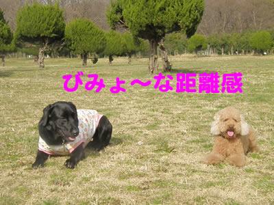 20100303_6.jpg