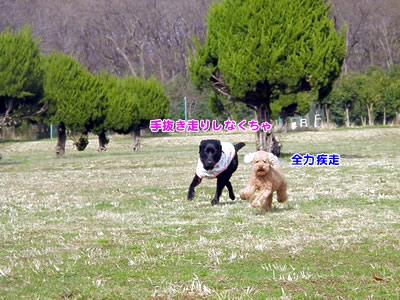 20100303_9.jpg