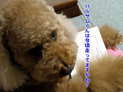 20100321_1.jpg