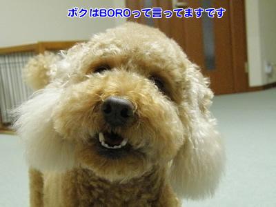 20100415_1.jpg