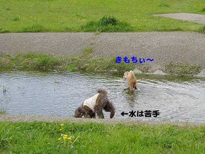20100424_13.jpg