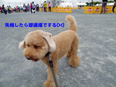 20100529_1.jpg