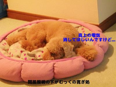 20100710_2.jpg