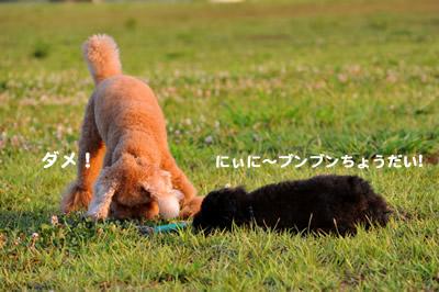 20100727_1.jpg