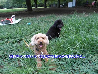 20100810_3.jpg