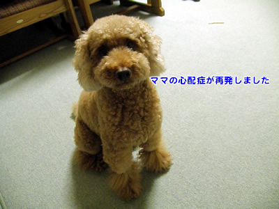 20100814_1.jpg