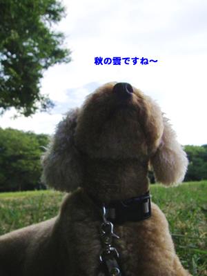 20100907_1.jpg