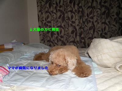 20100913_7.jpg