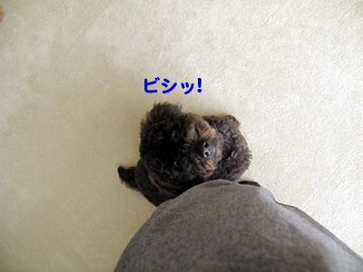 20101202_7.jpg