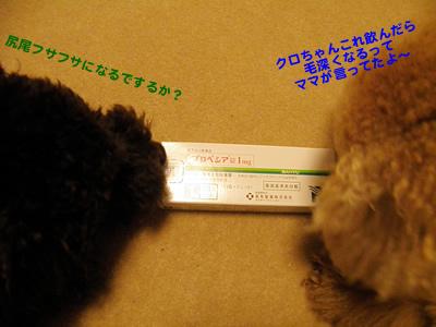 20101214_10.jpg