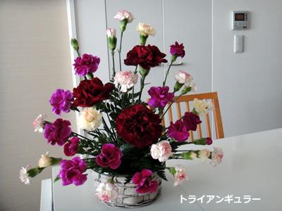 20110405_1.jpg