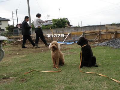 20110523_10.jpg