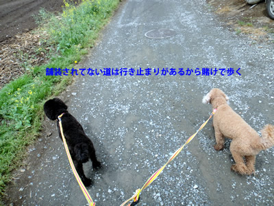20110523_14.jpg