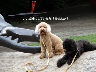 20110523_5.jpg