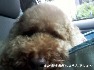 20110618_2.jpg