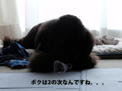 20110910_4.jpg