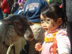 顔が黒い羊かわいいよね