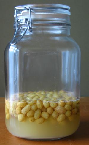 ホシノ天然酵母