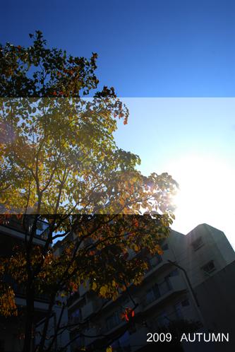 2009 Autumn