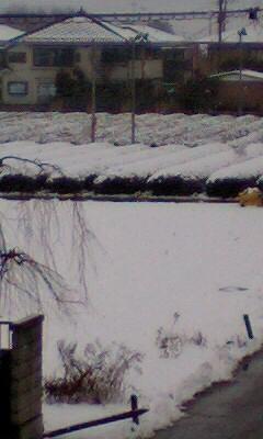 080203雪