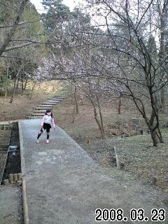 080323智光山公園で実織と桜