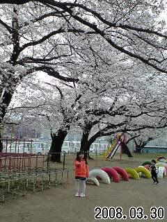 080330富士見小桜の下の実織1
