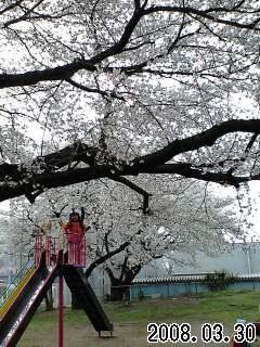080330富士見小桜の下の実織2