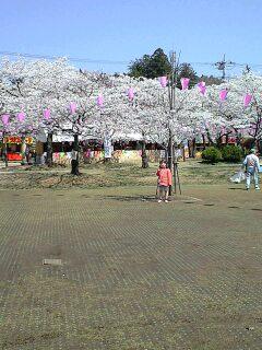 080404実織と桜1