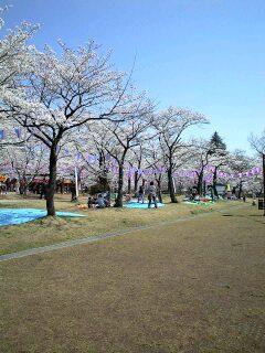080404桜見する人々