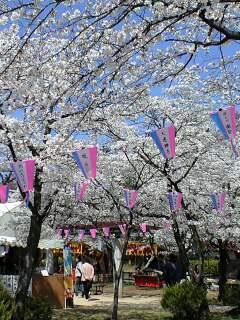 080404桜と屋台