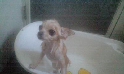 080712お風呂ベリー