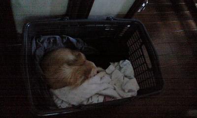 080712洗濯籠のベリー