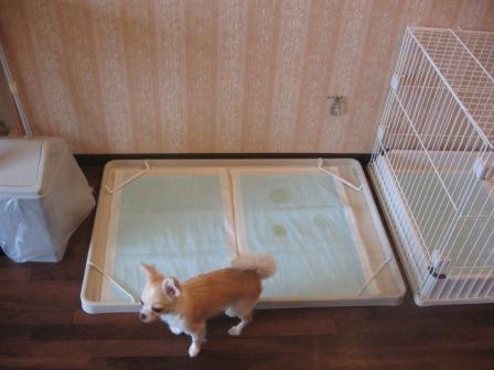 部屋の犬トイレ