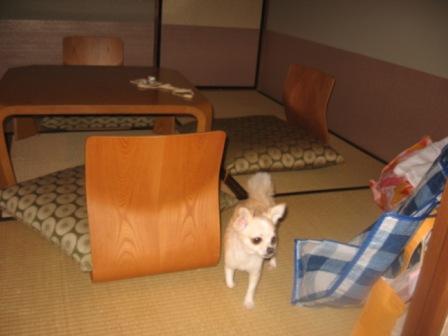 畳の部屋のベリー