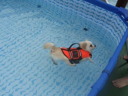 泳ぐプリン2
