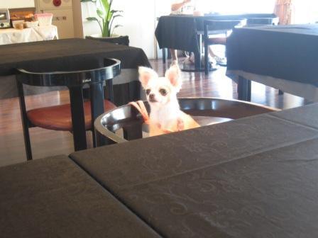 朝食、テーブルにつくベリー