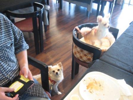 朝食を食べ終わって、パパ・プリ・ベリ