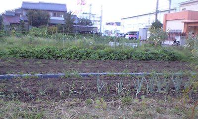 080903幼稚園の畑