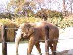 上野動物園その2