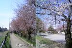 流山09春その1