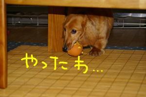 20070611c.jpg